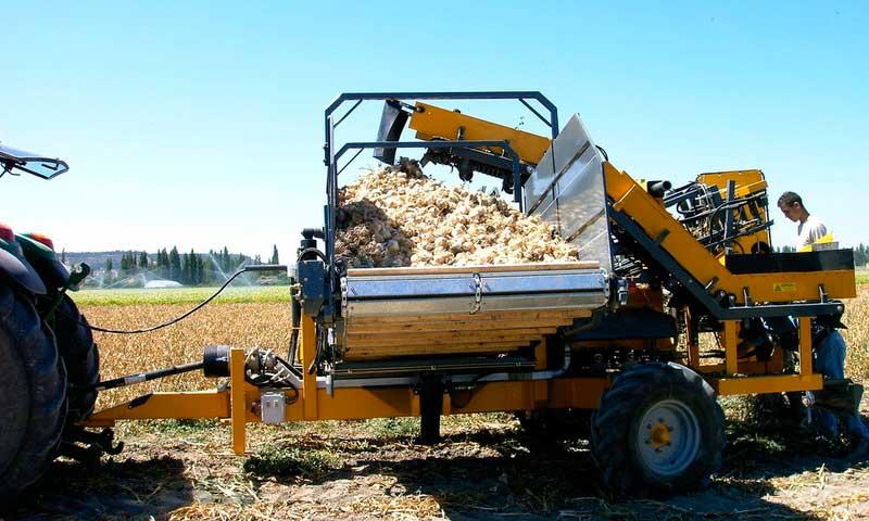 cosechadora ajos hidagri