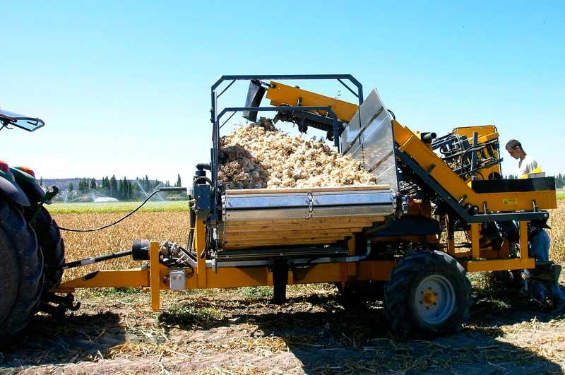 cosechadora de ajos hidagri 2